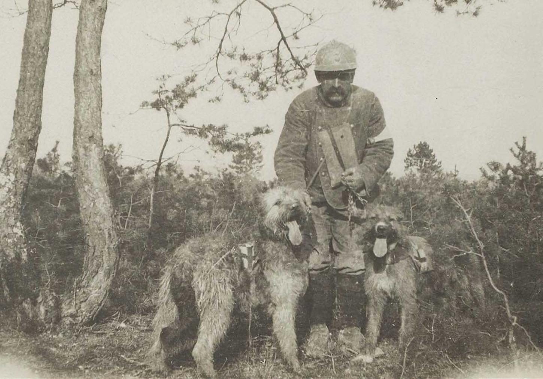 Bois des Perdreaux (sud-ouest de Tahure et sud de la route de Tahure à Souain). Brancardier français et deux chiens sanitaires recherchant les blessés, 25 septembre 1915. La Contemporaine: VAL 128/002.