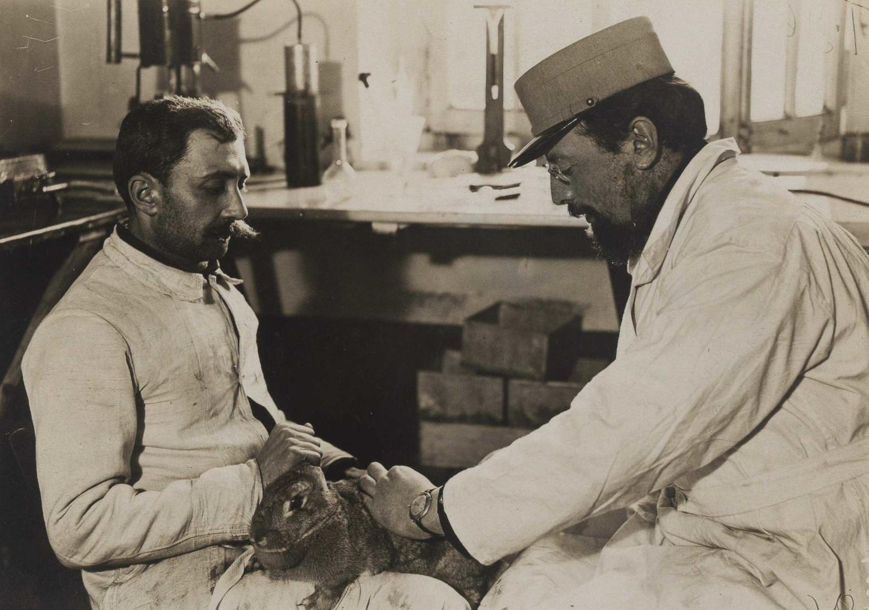 A Bar-le-Duc, dans le laboratoire de bactériologie de l'hôpital central de contagieux: prélèvement par deux militaires de sang sur un lapin inoculé. La photo est datée du 20 février 1916, soit la veille du déclenchement de la bataille de Verdun. La Contemporaine: VAL 214/130.